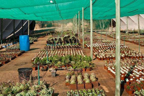 Succulent38
