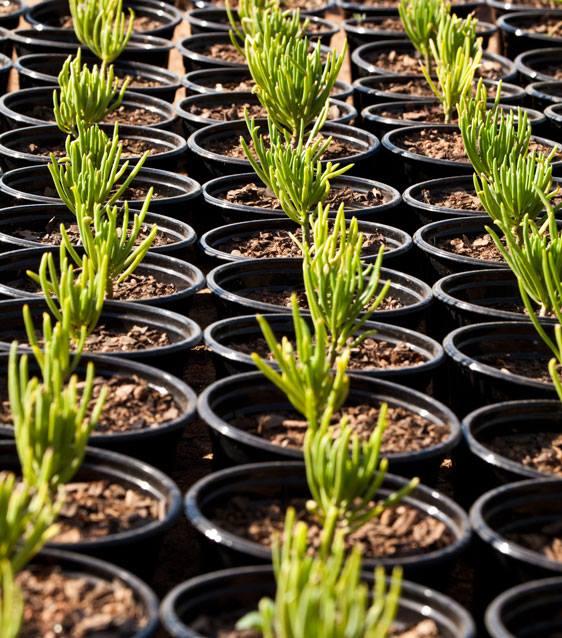 Succulent24