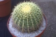 Succulent44