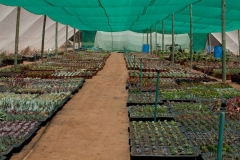 Succulent25